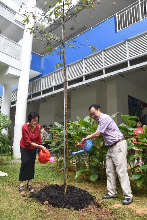 Former Principal Ms Ong Siew Lean watering the Tropical Crepe Myrtle tree that she planted